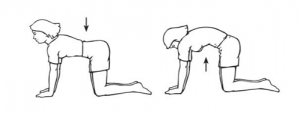 exercises-for-lower-back-pain-image